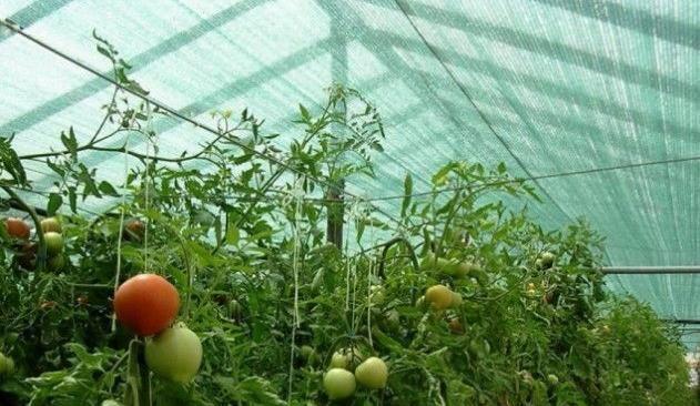 Затеняющая Сетка для теплиц огорода Хорошее качество