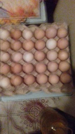 Домашнє куряче яйце.
