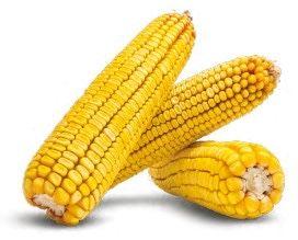 Насіння кукурдиз .Врожайність 14-15 т. Фао 310