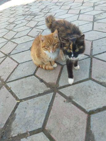 Котинята у добрі руки