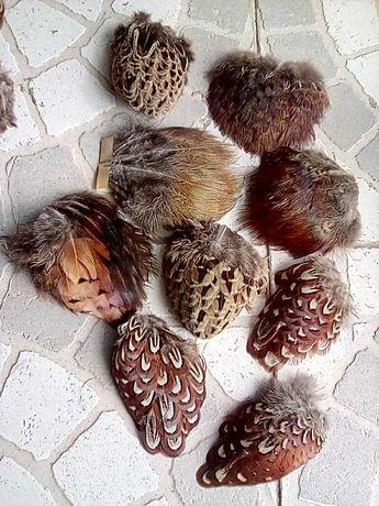 Отборное перо фазана.