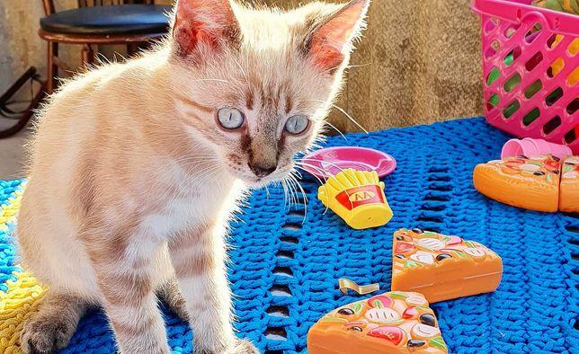Отдам бесплатно котят красивой окраски