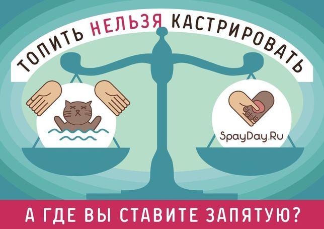 Котята / Щенки