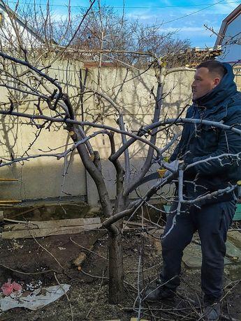 Обрезка сада Спил аварийных веток Спил дерева Обрезка деревьев
