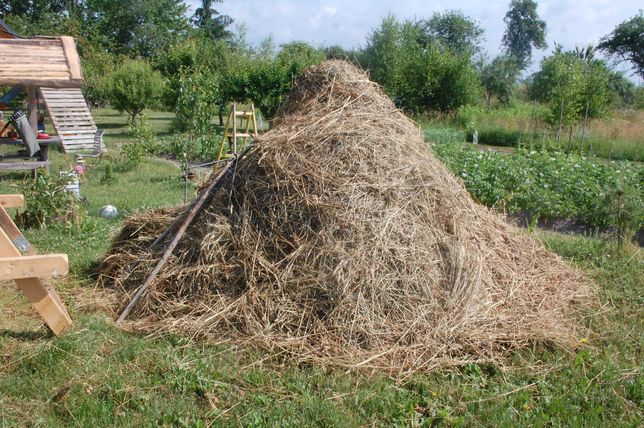Siano-trawa dla kuz konika