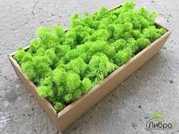 Стабилизированный мох ягель Зеленое Яблоко - 100 гр (очищенный)