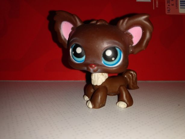 Zestaw LPS chihuahua