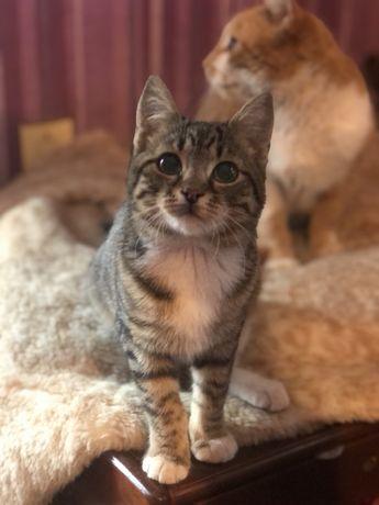 Девочка кошечка 4,5 месяца
