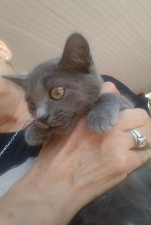 Котёнок в хорошие руки!