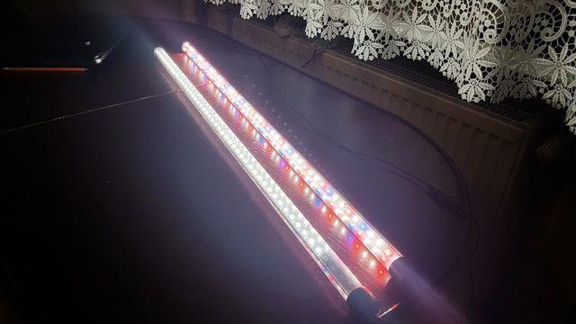 Oświetlenie LED - Oświetlenie akwarium