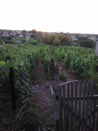 Участок с виноградником
