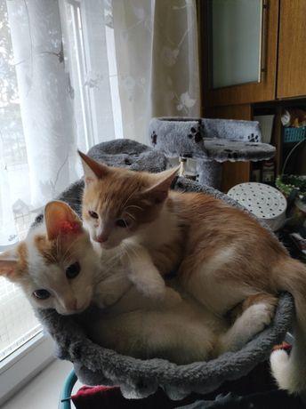 Zaginęły małe koty