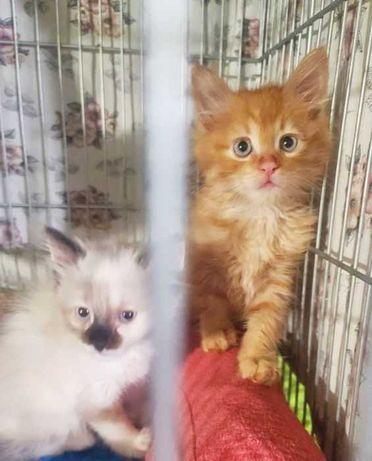 Пушистые крошки для самых ответственных людей, котята котенок кот