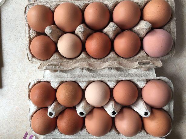 Jajka od szczęśliwych kur na wolnym wybiegu -eko