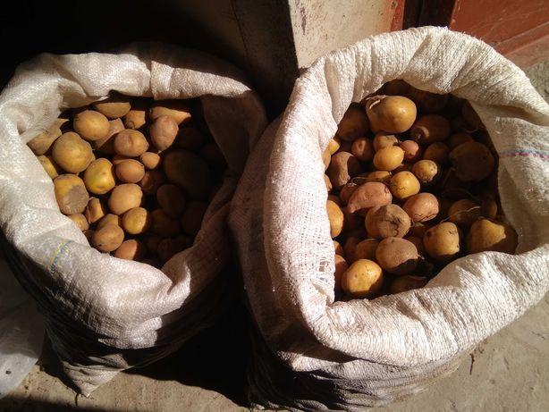 Домашняя мелкая кормовая картошка по 2 грн/кг