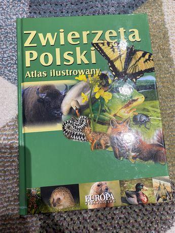Zwierzeta polski atlas ilustrowany