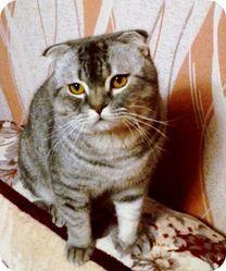 Вязка животных (кот)