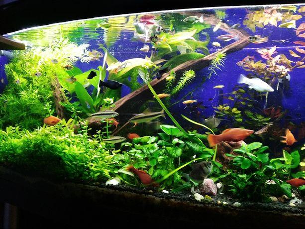 Rośliny akwariowe z przecinki