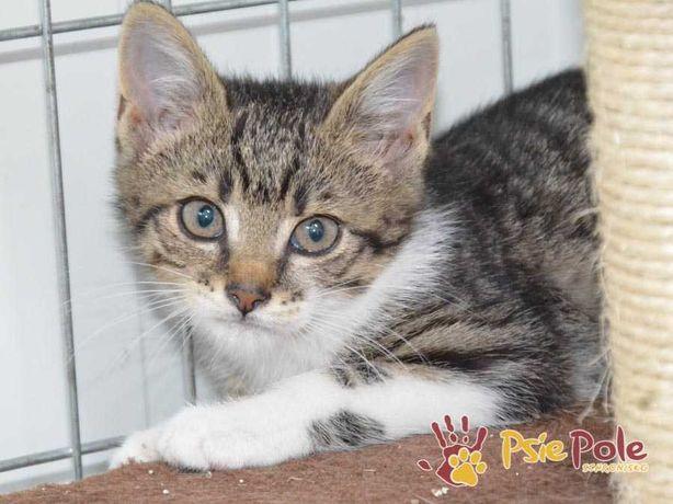 MAMIKOT-Buro-biały uroczy kotek szuka domu, adopcja