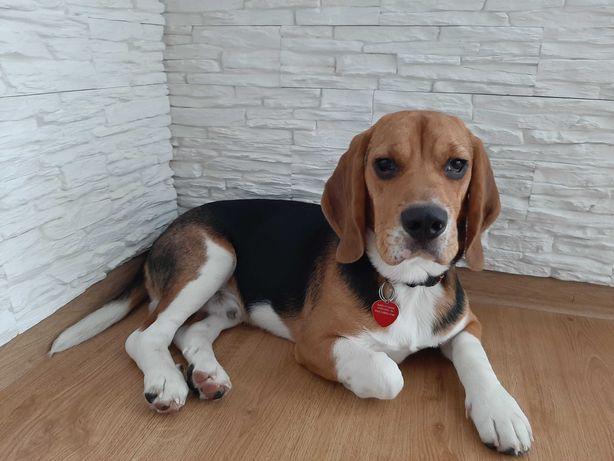 Reproduktor Beagle