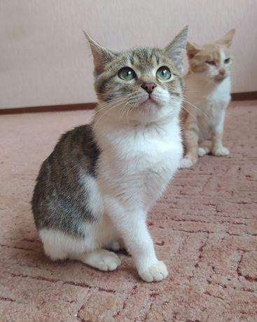 Отдам котят_котята_ Мелисса