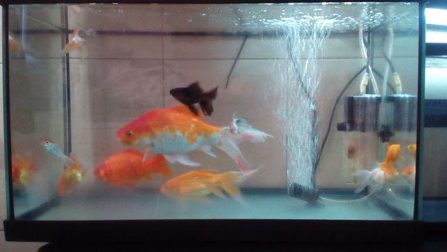 Peixes de água quente ou fria ler anúncio