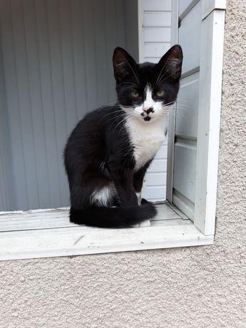 Безкоштовно, гарний котик Мурчик.