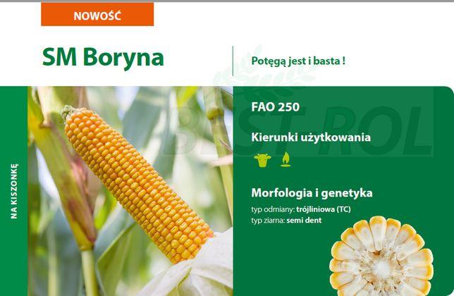 Kukurydza BORYNA 250 FAO Nasiona Kukurydzy NOWOŚĆ 2021