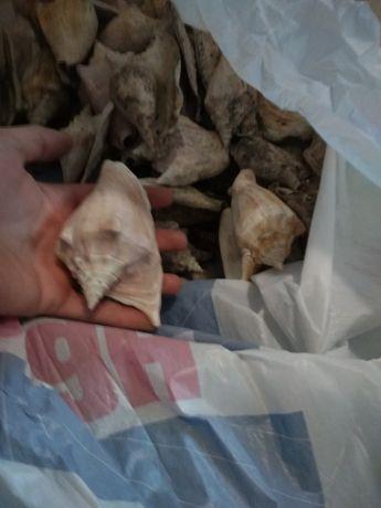Морские ракушки 40 штук