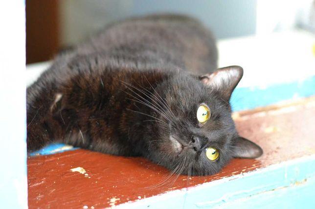 кішечка в чорній шубці яка дуже хоче бути домашньою 10м