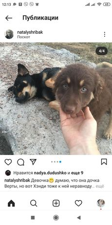 Бесплатно собаки в хорошие руки