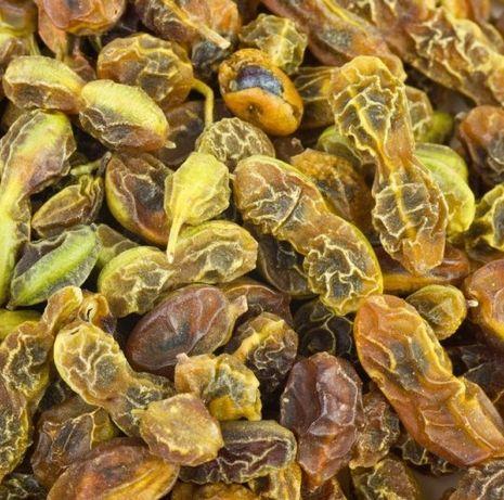 Софора японська, плоди сушені софори