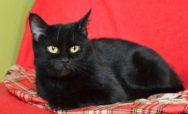 Очаровательная черная кошечка Мариса (10 мес.)