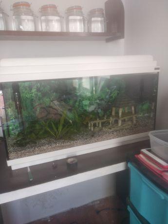 Aquario de 80 cm