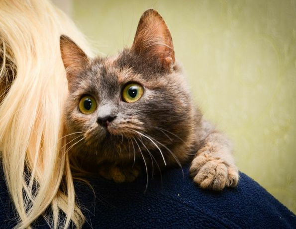 Кошка Мурка 3 года