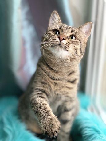Отдам котёнка лесного окраса,девочка,стерилизована,привита,7 месяцев
