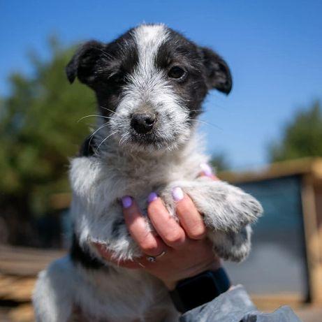 Малышка Джуди 4 месяца, щенок, щеночек, щеня собака собачка пес