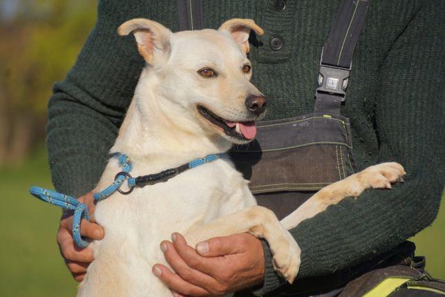 THASOS - niewielki, biały psiak z interwencji szuka domu