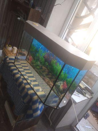 Продам новый аквариум цена 5.000 руб