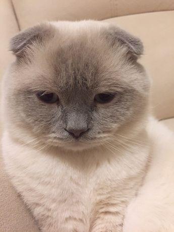 Вязка !!! Котик приглашает кошечку на свидание!!