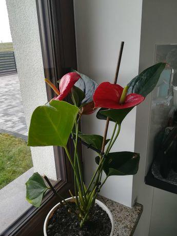Zamienię kwiaty na inne