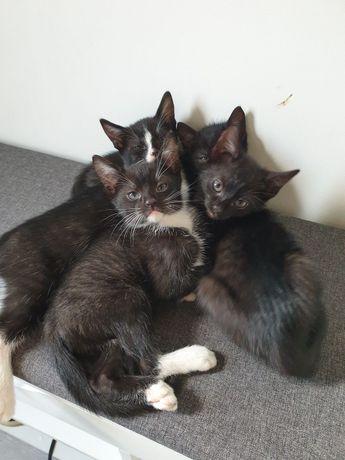 Кошенята котята безкоштовно