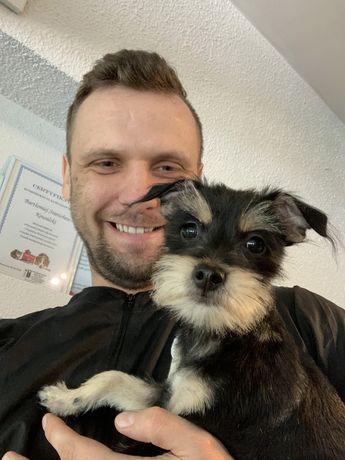Psi fryzjer, groomer, fryzjer dla psa