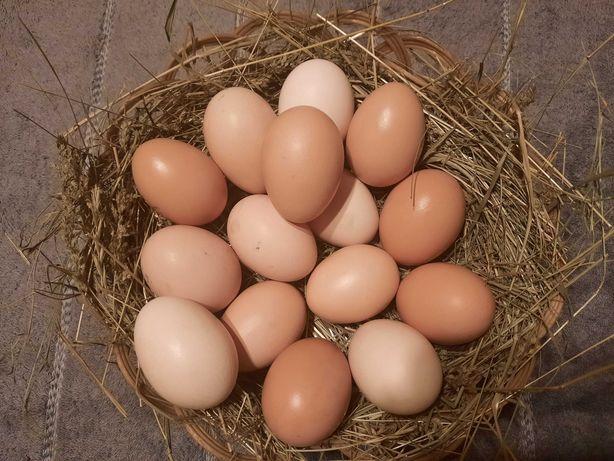 Jajka wiejskie ekologiczne z wolnego wybiegu