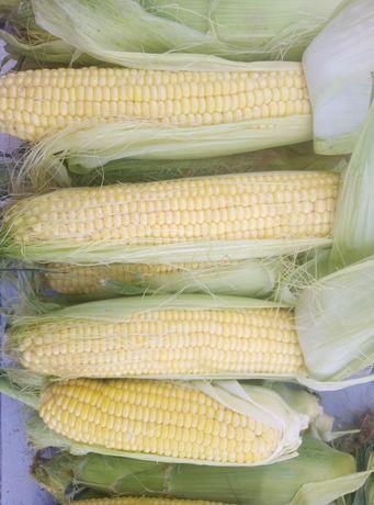 Кукуруза сладких сортов