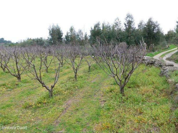 Terreno Agrícola Cortiçada Fundão