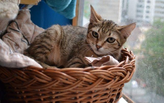 кішка Маня-полосушка 1р