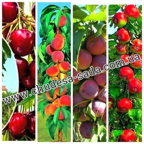 Колоновидные деревья персик,нектарин,груша,черешня,слива,яблоня,алыча