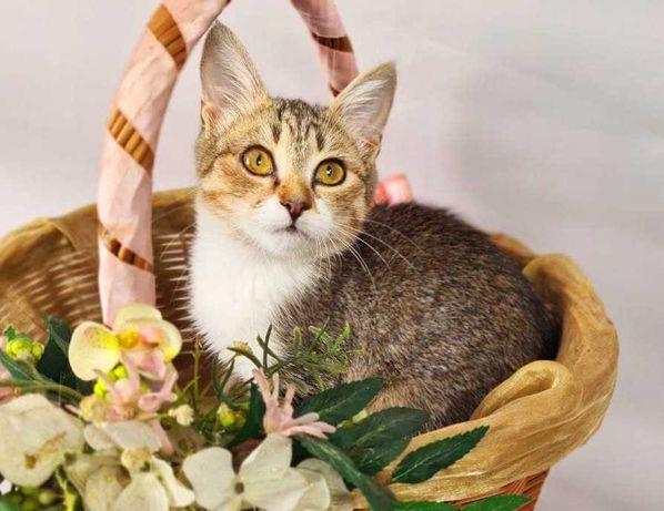 Жасмина 3мес котенок кошечка кошка киця