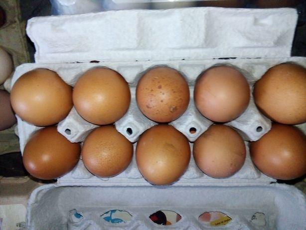 Jajka z wolnego wybiegu